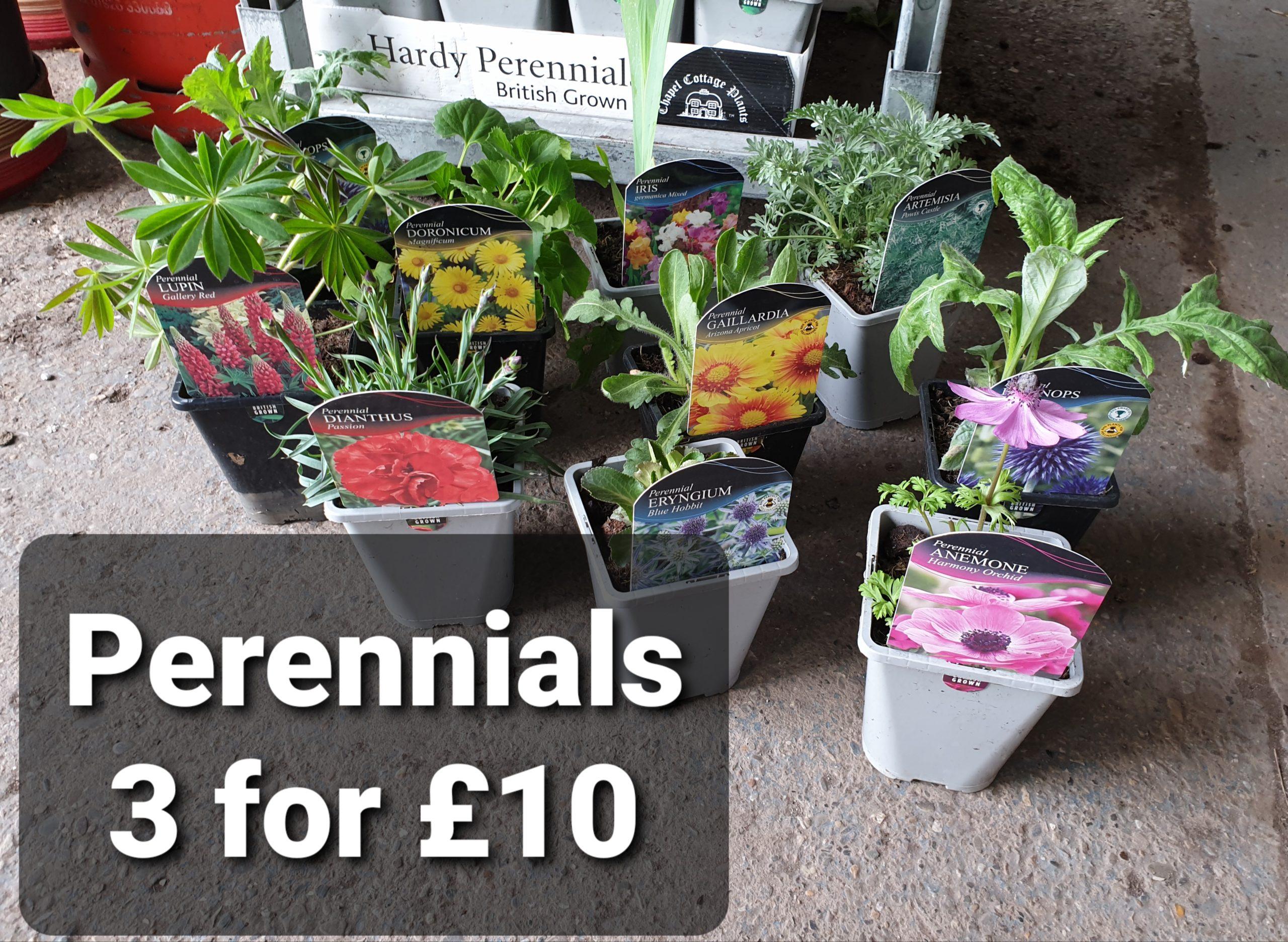 Perennial multi buy
