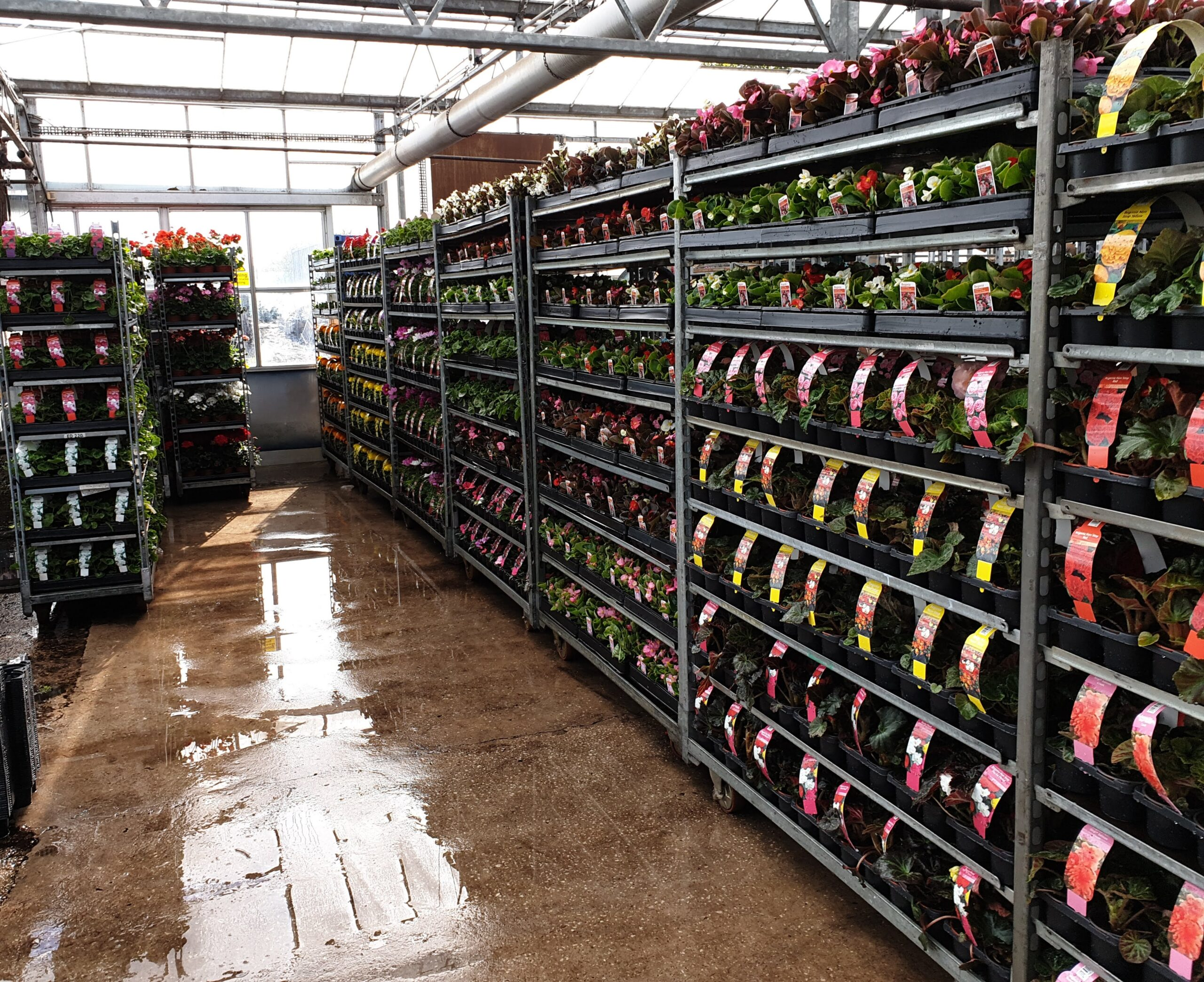 Trolleys of planted waiting to be delivered to garden centre